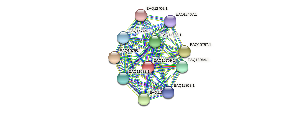 RB2654_05542 protein (Maritimibacter alkaliphilus) - STRING interaction network