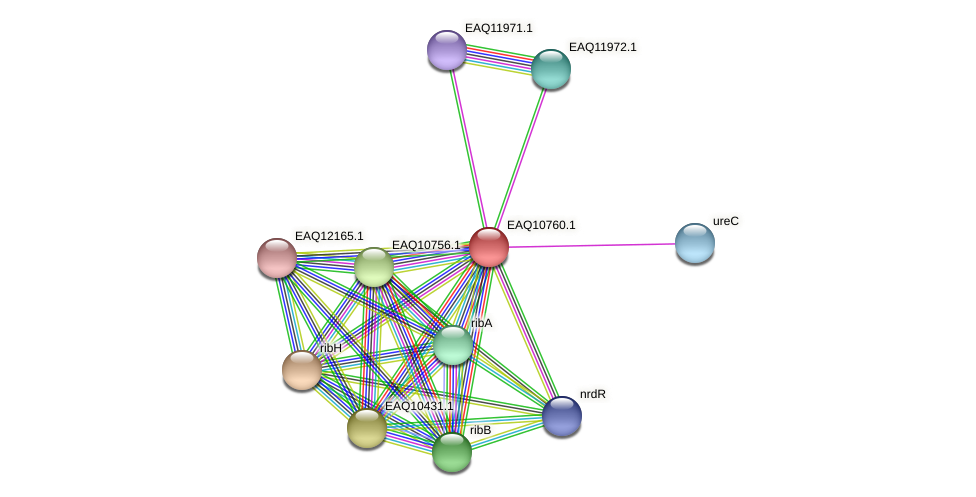 RB2654_05547 protein (Maritimibacter alkaliphilus) - STRING interaction network