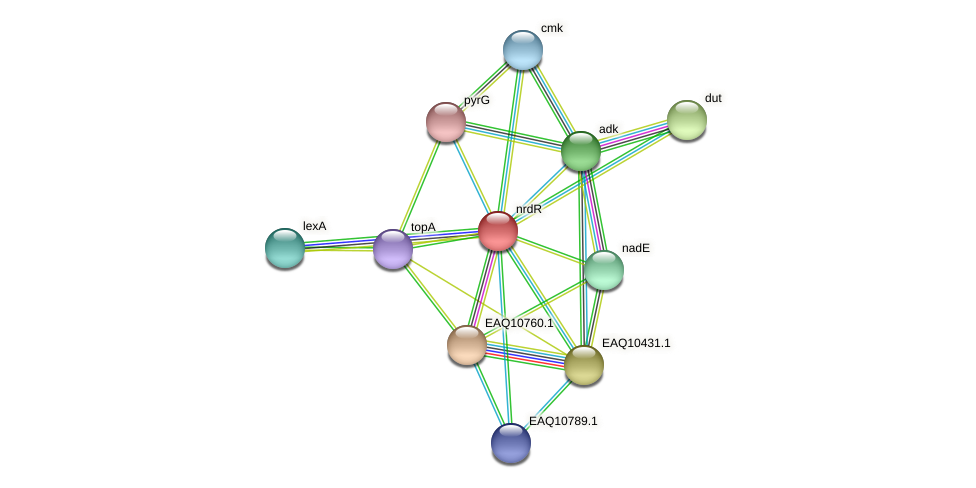 nrdR protein (Maritimibacter alkaliphilus) - STRING interaction network