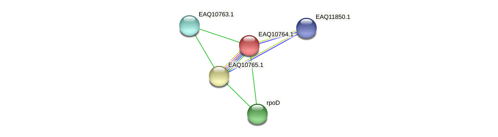RB2654_05567 protein (Maritimibacter alkaliphilus) - STRING interaction network