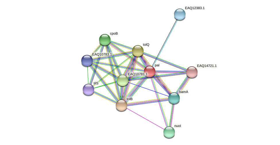 RB2654_05637 protein (Maritimibacter alkaliphilus) - STRING interaction network