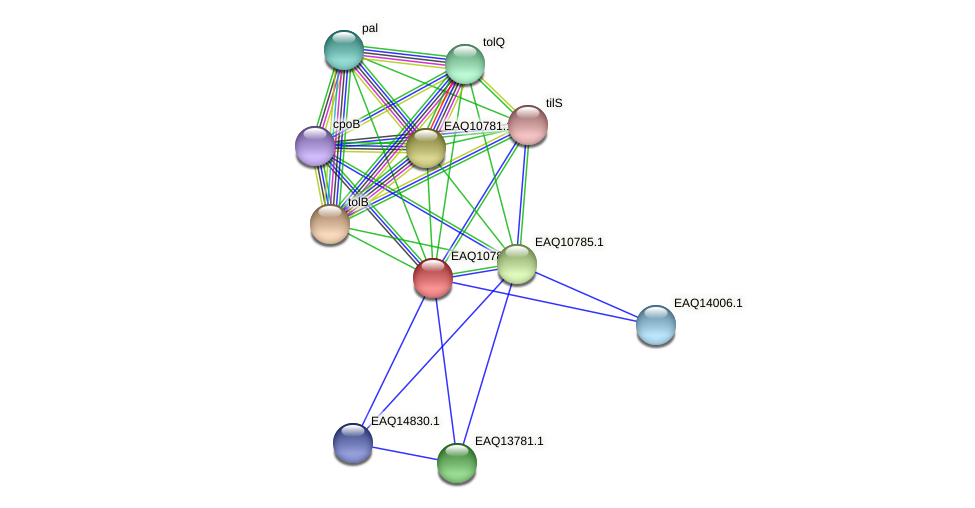 RB2654_05647 protein (Maritimibacter alkaliphilus) - STRING interaction network