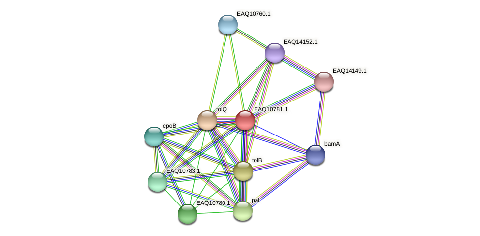 RB2654_05652 protein (Maritimibacter alkaliphilus) - STRING interaction network