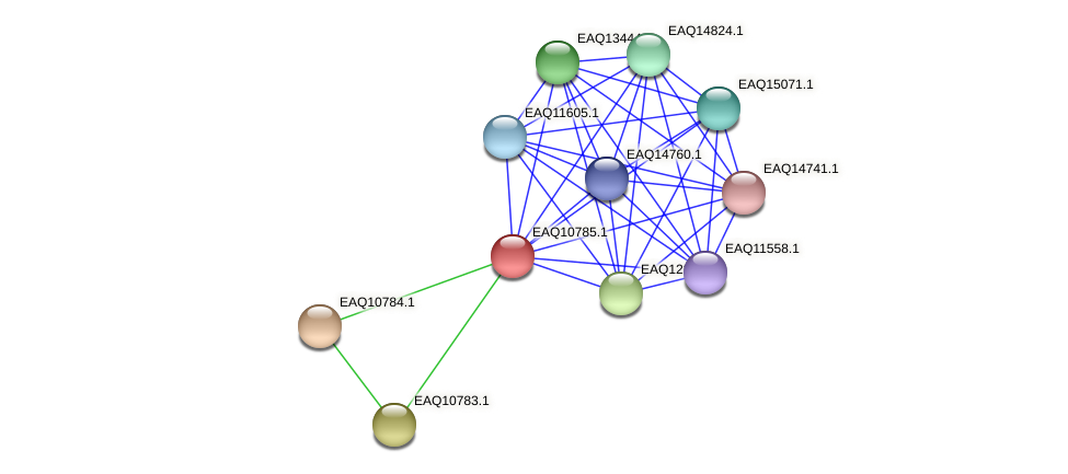 RB2654_05672 protein (Maritimibacter alkaliphilus) - STRING interaction network