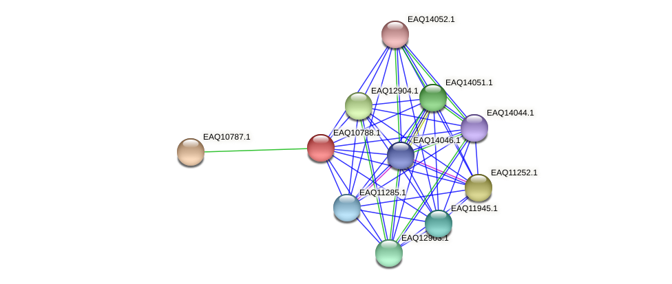 RB2654_05687 protein (Maritimibacter alkaliphilus) - STRING interaction network