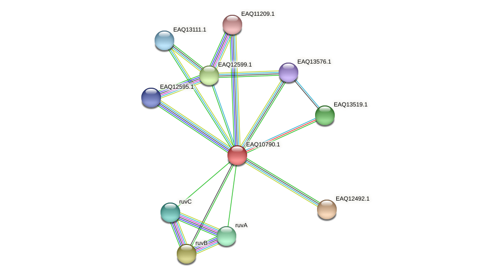 RB2654_05697 protein (Maritimibacter alkaliphilus) - STRING interaction network