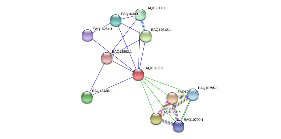 RB2654_05727 protein (Maritimibacter alkaliphilus) - STRING interaction network