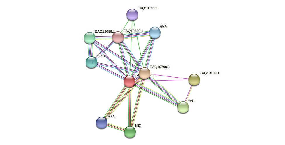 RB2654_05732 protein (Maritimibacter alkaliphilus) - STRING interaction network