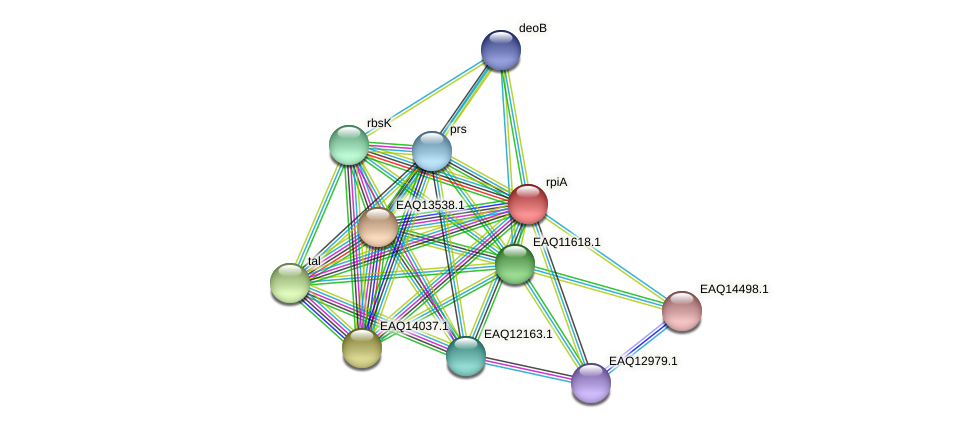 rpiA protein (Maritimibacter alkaliphilus) - STRING interaction network