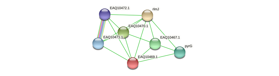 RB2654_05802 protein (Maritimibacter alkaliphilus) - STRING interaction network