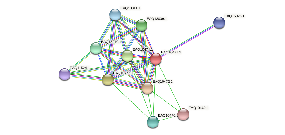 RB2654_05812 protein (Maritimibacter alkaliphilus) - STRING interaction network