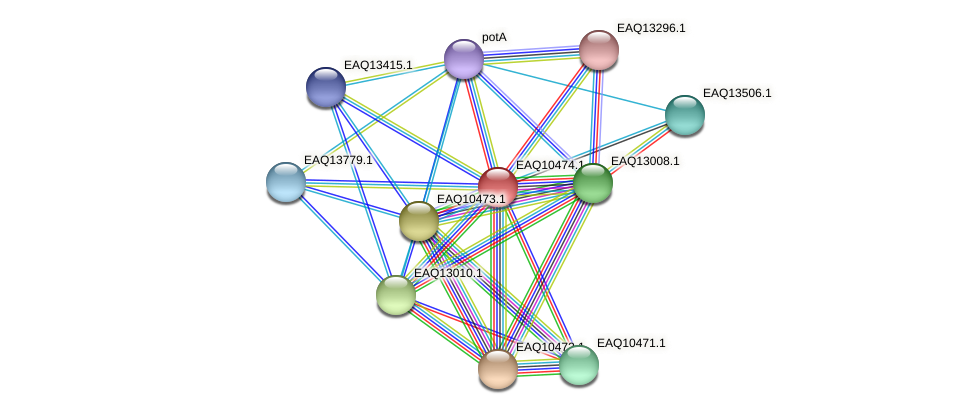 RB2654_05827 protein (Maritimibacter alkaliphilus) - STRING interaction network