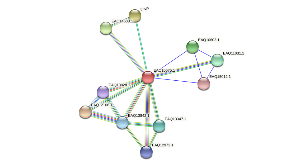 RB2654_05842 protein (Maritimibacter alkaliphilus) - STRING interaction network
