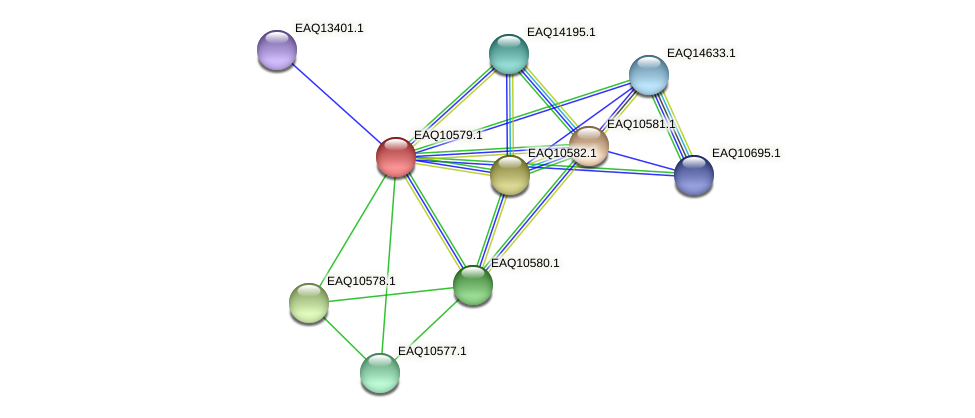 RB2654_05862 protein (Maritimibacter alkaliphilus) - STRING interaction network