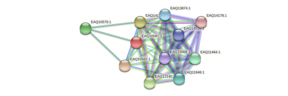 RB2654_05872 protein (Maritimibacter alkaliphilus) - STRING interaction network