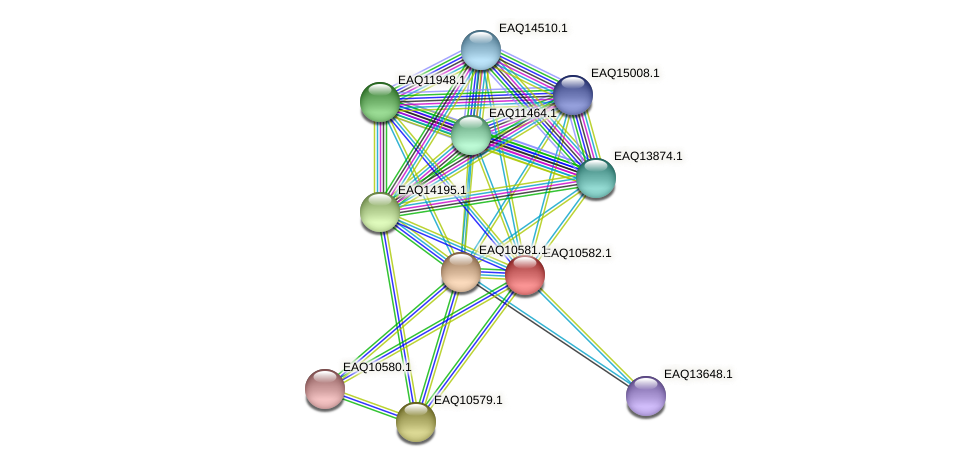 RB2654_05877 protein (Maritimibacter alkaliphilus) - STRING interaction network