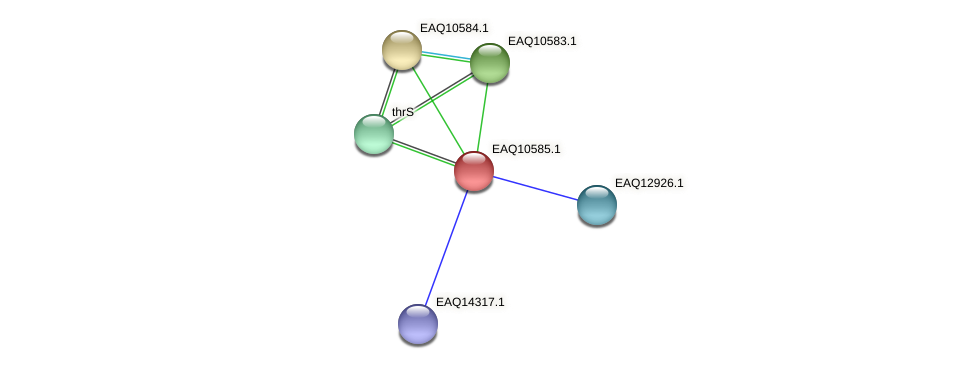 RB2654_05892 protein (Maritimibacter alkaliphilus) - STRING interaction network