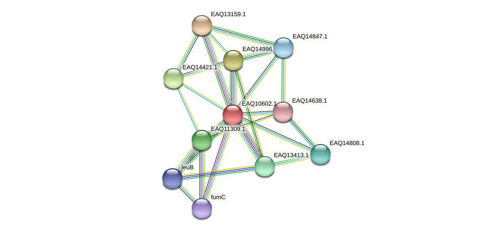 RB2654_05977 protein (Maritimibacter alkaliphilus) - STRING interaction network