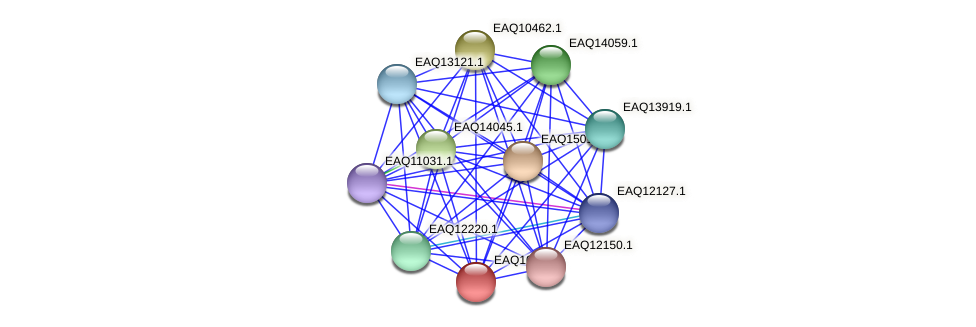RB2654_05982 protein (Maritimibacter alkaliphilus) - STRING interaction network