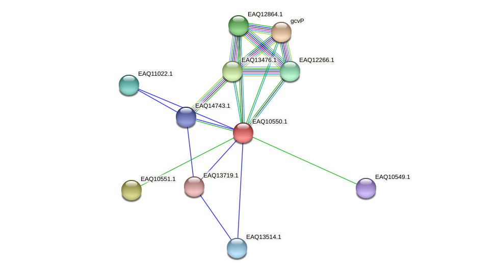 RB2654_05992 protein (Maritimibacter alkaliphilus) - STRING interaction network