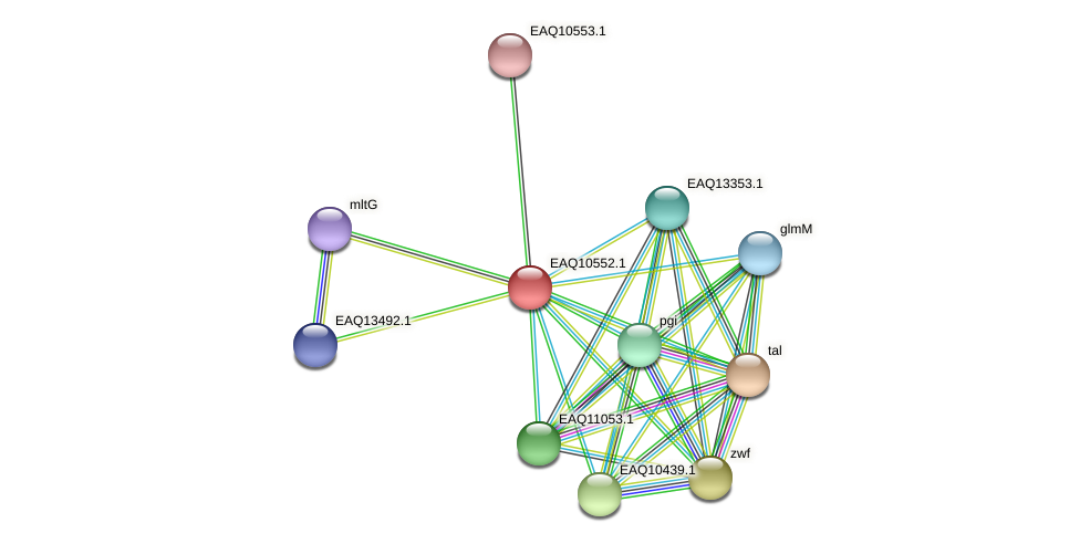 RB2654_06002 protein (Maritimibacter alkaliphilus) - STRING interaction network