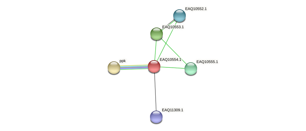 RB2654_06012 protein (Maritimibacter alkaliphilus) - STRING interaction network