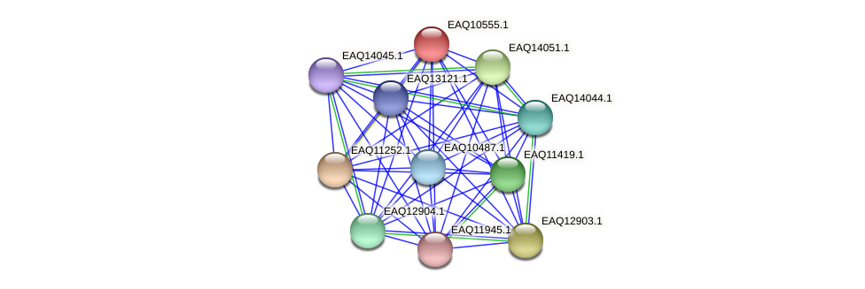RB2654_06017 protein (Maritimibacter alkaliphilus) - STRING interaction network