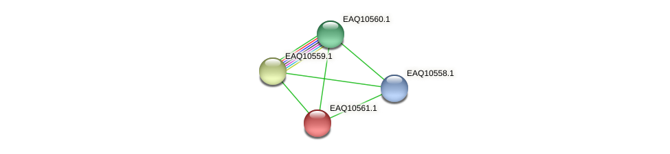 RB2654_06047 protein (Maritimibacter alkaliphilus) - STRING interaction network