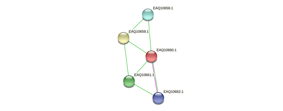 RB2654_06117 protein (Maritimibacter alkaliphilus) - STRING interaction network