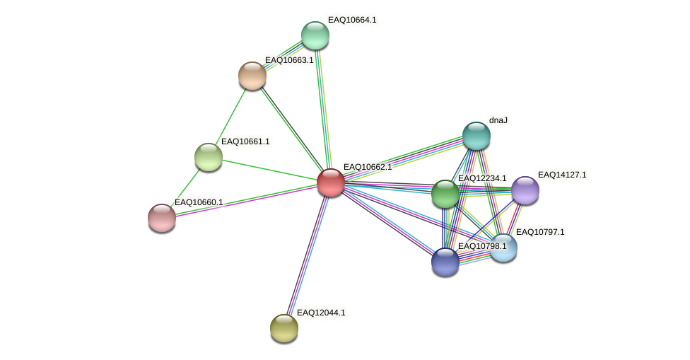RB2654_06127 protein (Maritimibacter alkaliphilus) - STRING interaction network