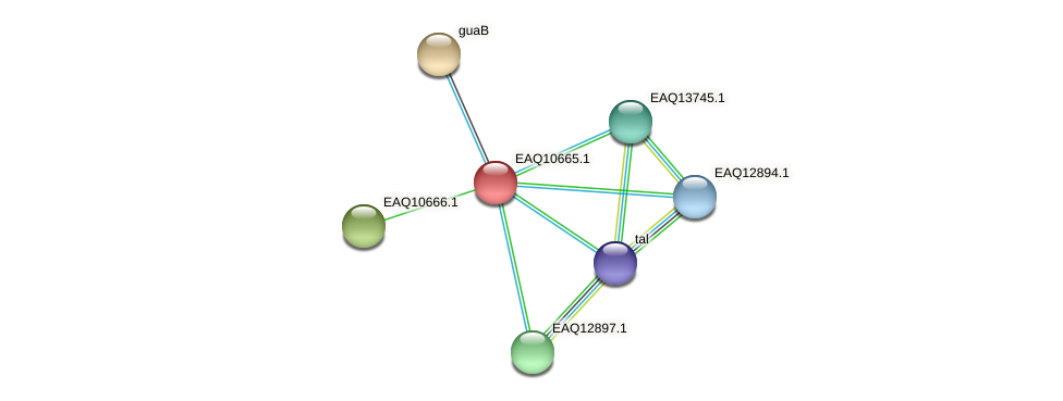 RB2654_06142 protein (Maritimibacter alkaliphilus) - STRING interaction network