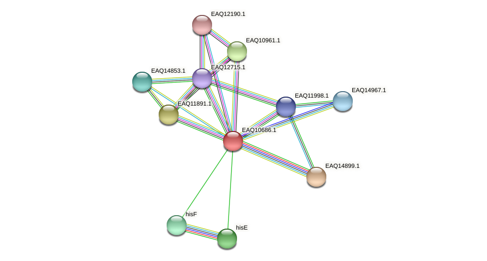 RB2654_06247 protein (Maritimibacter alkaliphilus) - STRING interaction network