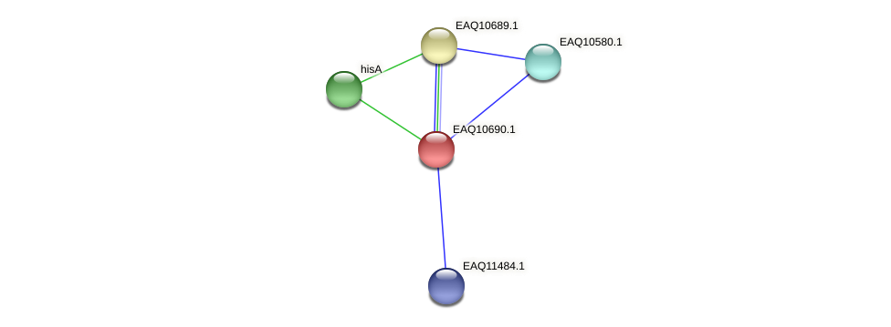 RB2654_06267 protein (Maritimibacter alkaliphilus) - STRING interaction network