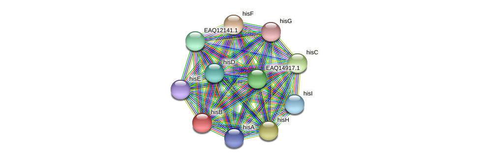 hisB protein (Maritimibacter alkaliphilus) - STRING interaction network