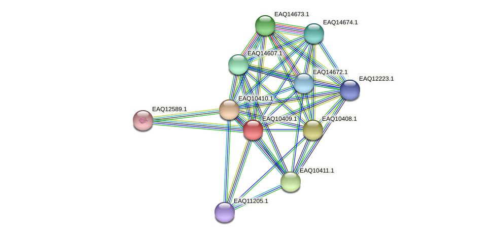 RB2654_06289 protein (Maritimibacter alkaliphilus) - STRING interaction network