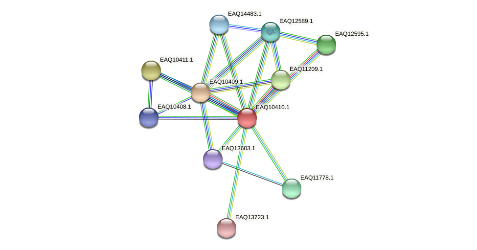 RB2654_06294 protein (Maritimibacter alkaliphilus) - STRING interaction network