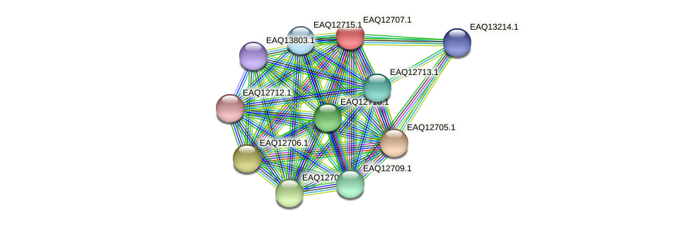 RB2654_06344 protein (Maritimibacter alkaliphilus) - STRING interaction network