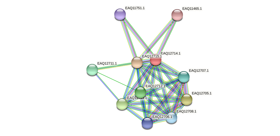 RB2654_06379 protein (Maritimibacter alkaliphilus) - STRING interaction network