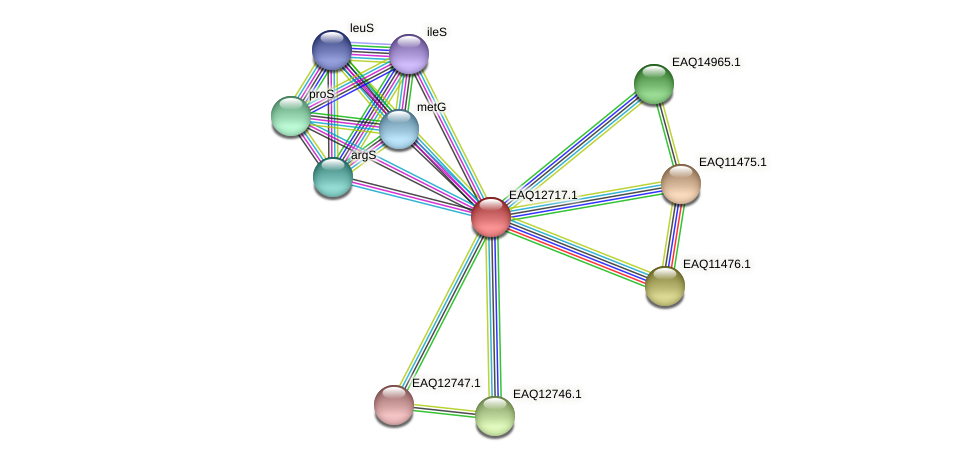RB2654_06394 protein (Maritimibacter alkaliphilus) - STRING interaction network