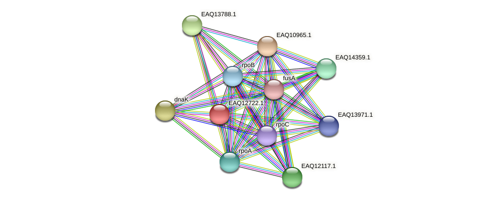 RB2654_06419 protein (Maritimibacter alkaliphilus) - STRING interaction network