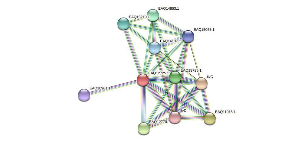 RB2654_06434 protein (Maritimibacter alkaliphilus) - STRING interaction network