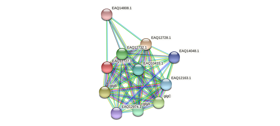 RB2654_06444 protein (Maritimibacter alkaliphilus) - STRING interaction network