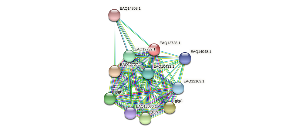 RB2654_06449 protein (Maritimibacter alkaliphilus) - STRING interaction network