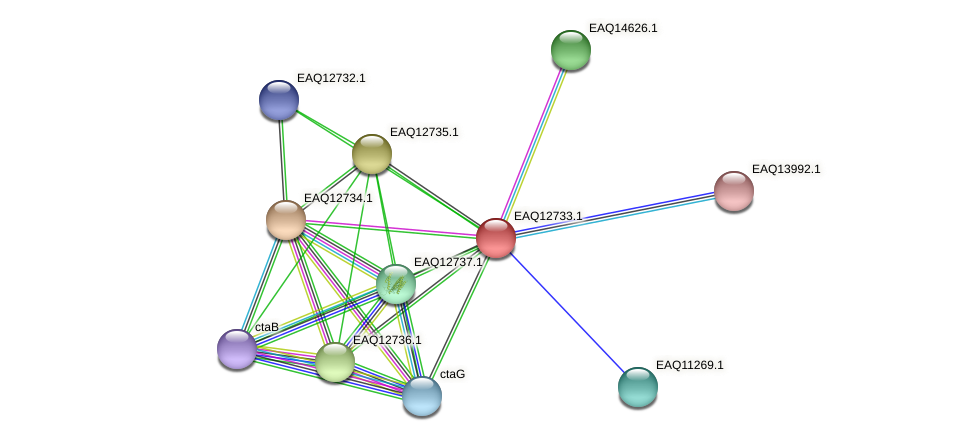 RB2654_06474 protein (Maritimibacter alkaliphilus) - STRING interaction network