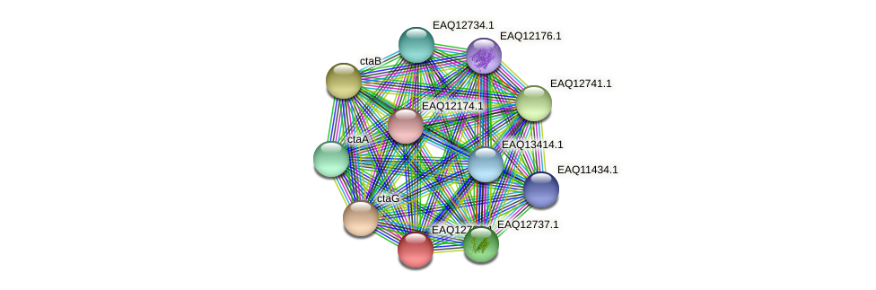RB2654_06489 protein (Maritimibacter alkaliphilus) - STRING interaction network