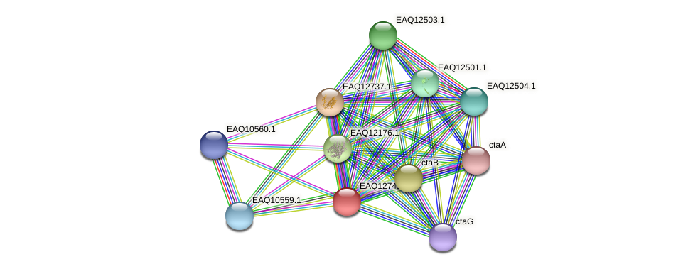 RB2654_06514 protein (Maritimibacter alkaliphilus) - STRING interaction network