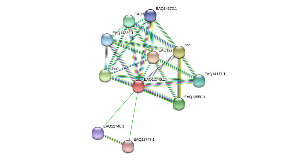 RB2654_06534 protein (Maritimibacter alkaliphilus) - STRING interaction network