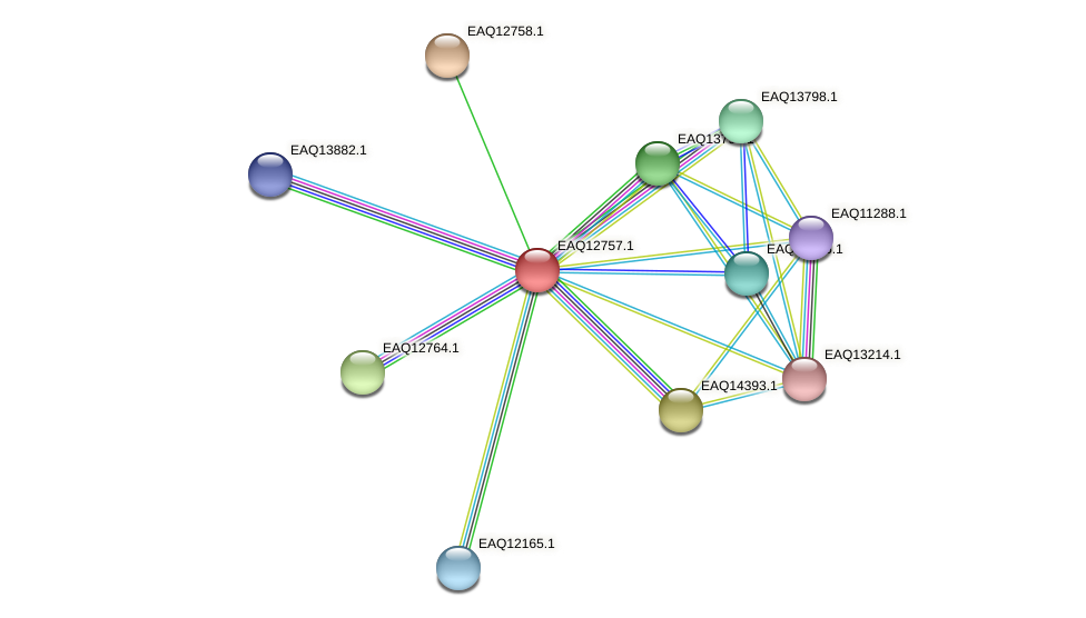 RB2654_06594 protein (Maritimibacter alkaliphilus) - STRING interaction network