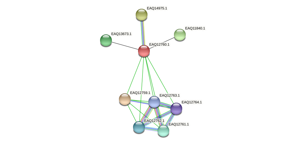 RB2654_06609 protein (Maritimibacter alkaliphilus) - STRING interaction network