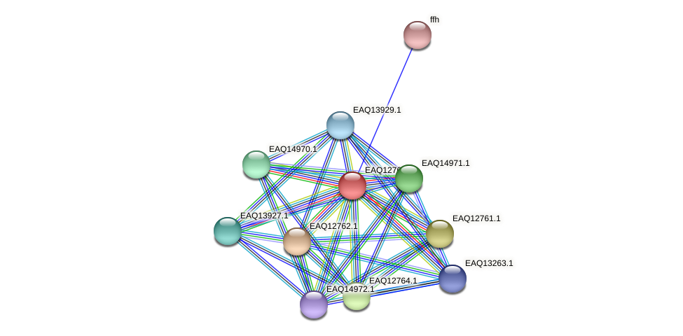 RB2654_06624 protein (Maritimibacter alkaliphilus) - STRING interaction network